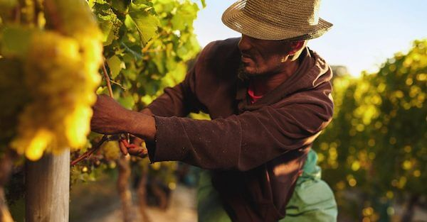 Structural Racism Eliminated Black Farmers: Report